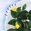 HIVERSAC téli takaró zsák fehér 1,8x2 m (3 zsák/csomag)