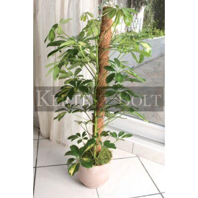Tuteur coco termesztö karó 0,6 m